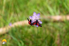 Diese Schmetterlinge heissen Albert und Larissa. Sie sind ein Paar seit 10 Jahren