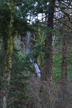 Closer view of the unnamed falls along old highway 30, east of Latourell Falls.  Columbia Gorge, OR.  01/2014.