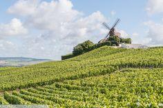 The G.H. Mumm Windmill overlooking the vineyards in Verzenay, France.