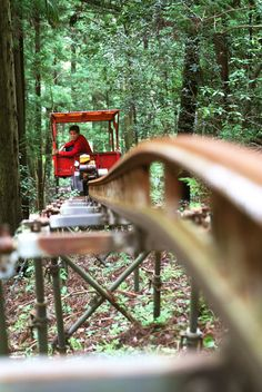 Small mono rail transit runs thru forest.