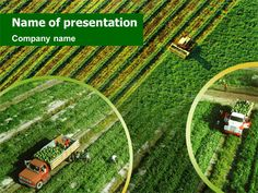 Corn thanksgiving free powerpoint template free powerpoint presentation templates keynote agriculture presentation layout toneelgroepblik Image collections