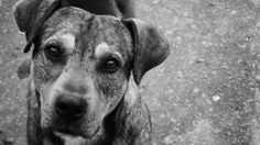NO to the kennel in Chubut. They kill all dogs. Adopt a dog stay