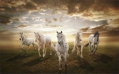 Popular Horse Sunset-Buy Cheap Horse Sunset lots from China Horse ...