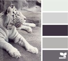 Tiger Tones | Repinned by PeachSkinSheets <3