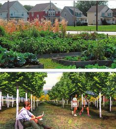 Community gardens are sprouting up all over Cleveland.