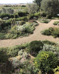 Luciano Giubbilei / The Mediterranean garden in Tuscan garden Australian Garden Design, Mediterranean Garden, Tuscan Garden, Small Garden Design, Dry Garden, Backyard Landscaping, Landscape, Outdoor, Outdoor Gardens