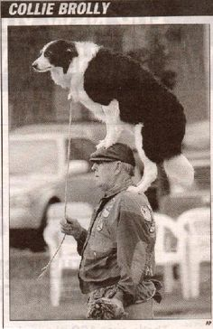 Border Collie and master at a herding competition in the UK