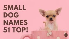 Small Dog Names 51 BEST 🐾 TOP 🐾 CUTE 🐾 Ideas   Names #SmallDogNames #DogNames Unique Female Dog Names, Small Dog Names, Cute Names For Dogs, Best Dog Names, Pet Names, Small Dogs, Cute Girl Puppy Names, Best Apartment Dogs, Best Dogs For Families