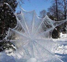 Kristallisiertes Spinnennetz im Winter, bezaubernd wundervoll!