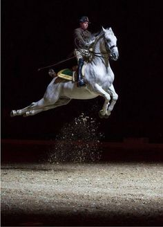 THE CAPRIOLE---  AIRS ABOVE THE GROUND  #HORSES
