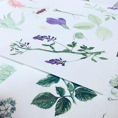 Commissioned Botanical flowers work in progress #botanical #sketchbook #sketch #watercolor #art #artist #doodle #doodling #flowers #instaart