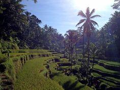 Tegallalang rice fields - Ubud