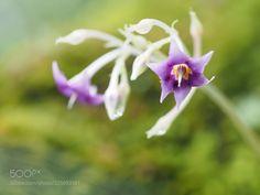 Flower (Tadashi Yamaura / Okazaki / Japan) #E-M5 MarkII #macro #photo #insect #nature