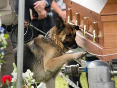 A photo demonstrating the bond between a man and his dog is breaking hearts across the Internet. The picture shows Figo, a K-9 officer, paying his last respects at the funeral of his fallen human partner, Kentucky police officer Jason Ellis. In the photo, Figo lays a paw on Ellis's casket. The 33-year-old Ellis was killed in a suspected ambush.The picture generated hundreds of comments after bei