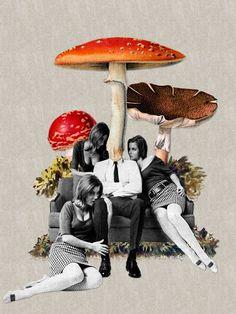 #shrooms mushrooms