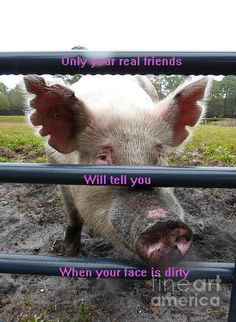 """""""Your Dirty Face"""" #pig #humor #AnimalArt"""