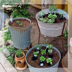 herbs to grow to get rid of those bugs in and around the home