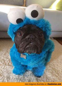 Disfraces de perros: Monstruo de las Galletas.