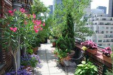 Sunroom, Indoor Plants, Balcony, Porch, Patio, Gardens, Google, Diy, Terrace