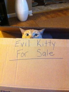 There are some real creeps out there. No denying it. | The Search For Love, As Told By Cats In Boxes