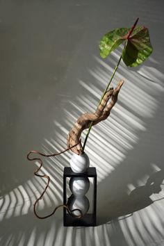 Anthurium with Driftwood and Kiwi Vine