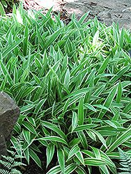 Every Gardener Needs Carex – Find A Variety That Works for You| Gardening, Gardening Tips and Tricks, Gardening Hacks, Gardening 101, Carex, How to Grow Carex, Gardening Ideas, Landscape Hacks, TIps and Tricks, Outdoor Living