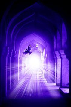 Purple majesty. Blindingly beautiful. grm