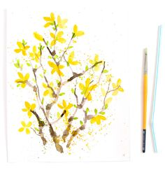 Paint Watercolor Flowers - Forsythia