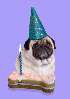 19 Best PUG BIRTHDAY CARDS Images