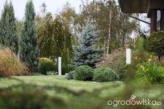 Ogród Dominiki - strona 8 - Forum ogrodnicze - Ogrodowisko