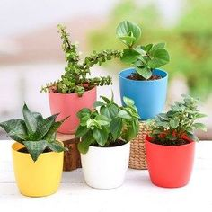 Plants Packs By Seasons#packs #plants #seasons Fruit Plants, Buy Plants, Large Plants, Planting Succulents, Planting Flowers, Diy Privacy Fence, Garden Online, Winter Plants, Garden Stand