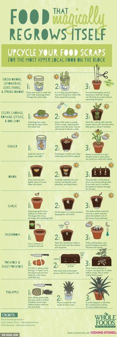 Food that magically grows from kitchen waste - An . Food that magically grows from kitchen waste - growing vegetables, plants, organic vegetable garden, growing food, indoo. Clean Eating List, Eating Well, Cheap Eating, Organic Gardening, Gardening Tips, Balcony Gardening, Urban Gardening, Gardening Supplies, Garden Planters