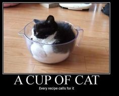 A cup of cat. black and white kitty