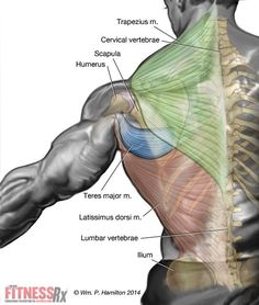 The One Exercise To Blast Your Upper Body