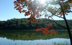 Many great places to hike, horseback ride, swim and camp. Cypress Swamp, Cypress Trees, Kayak Camping, Camping Life, White Water Kayak, Missouri Camping, St Joes, Florida Springs, Merritt Island