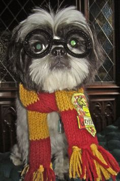 Hairy Potter (aka our shih tzu Nietzsche) in a costume made by my partner Visit our website now!
