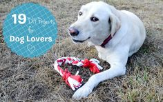 19 DIY Projects/Treats for Dog Lovers
