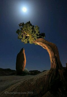 "Natureza - I don't know the name of this place, but I would call it ""The Kissing Tree"" because it seems to be bending over to kiss the rock..."