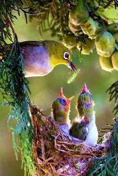 little birds.                                                       …