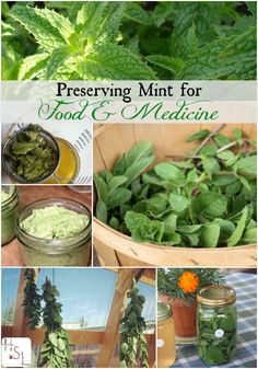 for Food & Medicine Make the most of this prolific herb by preserving mint for food & medicine with these tasty and easy methods.Make the most of this prolific herb by preserving mint for food & medicine with these tasty and easy methods. Healing Herbs, Medicinal Plants, Natural Healing, Natural Medicine, Herbal Medicine, Culture D'herbes, Wild Edibles, Growing Herbs, Fresh Herbs
