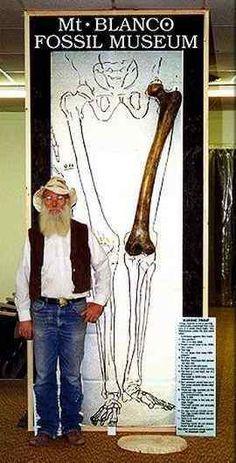 """Apesar da bíblia os tratarem apenas como """"gigantes"""" e não reservarem uma área exclusiva sobre este povo curioso, existem indícios de civilizações antigas (sumérios) que registraram a presença de seres enormes, inteligentes, superiores e o mais aterrorizante: possivelmente extra-terrenos.  Os Nefilins mediam mais de 3 metros. Na verdade alguns historiadores chegam a dizer que os filhos dos Nefilins com humanas (ou seja, híbridos) é que mediam cerca de 3 metros, e os """"sangue-puro"""" mais que…"""