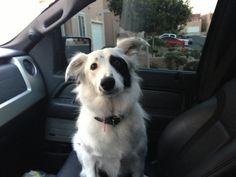 Zak bagans doggie Gracie :)