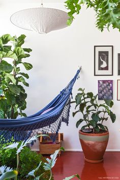 Rede de balanço dentro de casa com muitas plantinhas em volta = sonho de consumo