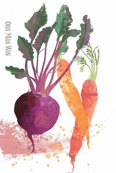 Beetroot & carrots Ohn Mar Win Illustration