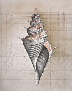 Fibonacci sequence shell