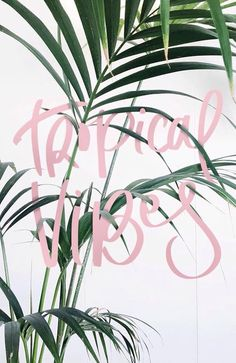 Tropical vibes inspiration- love the candy floss pink against the palm tree! Gives the image a vintage beach feel. Style Tropical, Tropical Vibes, Vibes Tumblr, Summer Quotes, Grafik Design, Summer Of Love, Summer Vibes, Weekend Vibes, Palm Trees