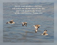 From Daily Scripture project by artist Dawn Currie -   Surely your goodness and…