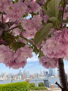 Seasons, Fruit, Spring, Plants, Seasons Of The Year, Plant, Planets