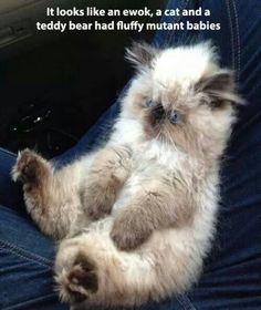 It's looks like an ewok, a cat and a teddy bear had fluffy mutant babies.
