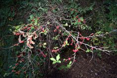 The bright orange berries of the Possumhaw tree can hold on through the winter long after the leaves have dropped. If you see orange berries on bare twigs, it's probably a Possumhaw.
